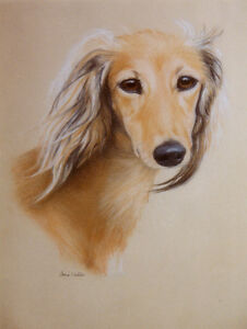 SALUKI  CHARMING DOG GREETINGS NOTE CARD, BEAUTIFUL HEAD STUDY