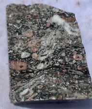 Several Fossilized Crinoid specimens
