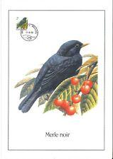 FDC 2458 - Oiseau Buzin sur gravure format A4 !