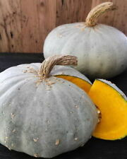 35 Sweet Meat Winter Squash Heirloom Seeds - Gift - COMB S/H
