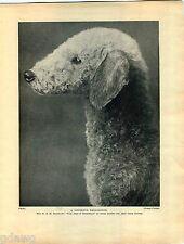 1930 Book Plate Print Dog Bedlington Terrier Wild Oats Bransways Pediar Paladin