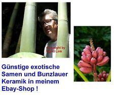 exotischer Samen-Set: frostharter RIESEN-BAMBUS und trendige Indoor ROSA BANANE