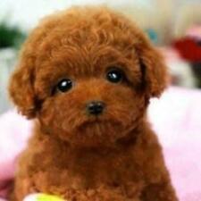 Realistic Teddy Dog Simulation Toy Dog Puppy Lifelike Stuffed Toy AU R3G7
