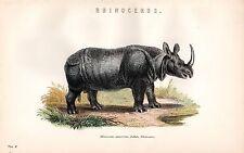 1880 Hand Farbiger Druck ~Nashorn~ Rhinocerus Unicornis ~ Indianer Rhino