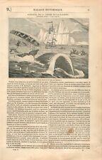Pêche Chasse à la baleine Marins en Canot & Harpon GRAVURE OLD PRINT 1834
