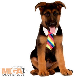 Rainbow Tie Set Dogs Fancy Dress Clown Circus Novelty Animal Pup Pet Costume Acc
