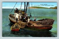 Pacific Northwest, Purse Seining, Vintage Postcard