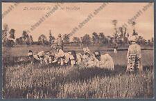 MONDINE 301 MONDARISO RISO RISAIA LAVORI AGRICOLI - VERCELLI Cartolina viag 1908