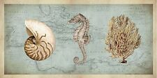 Deborah devellier: sea treasures I terminé-image 50x100 la fresque plage coquillages
