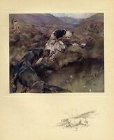 GROUSE HUNTING WITH DOGS 1909 ANTIQUE COLOR PRINT GROUSE HUNT POINTER DOGS