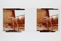 Giraffa Giardino Acclimatazione Parigi Foto Placca Da Lente Stereo Vintage