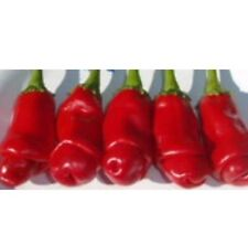 10 Peter Pepper Seeds Vegetable Garden Chilli Pornographic Chili Plant HOT uk