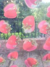 5 Metri di chiaro vinile TOVAGLIA copertura tessuto rosso fragola ESTATE DESIGN
