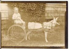 Happy Baby Kid Sitting In Billy Goat Cart Ride Antique 1920s Photo