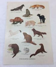 1942 print ~ Fur Bearing Animals