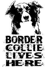 Border Collie Lives Here Door Window Sticker Sigh Gift Dog Lover