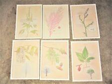 stemmer art prints botanical trees grasses 9 Latin plant / tree posters