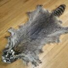 """Large 41"""" Long Tanned RACCOON HIDE FUR - Lodge and Cabin Decor, Wall Hanging"""