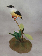 White-Collared Manakin Original Wood Carving