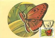 Licaena dispar rutila  butterfly Postcard