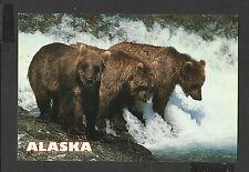 Colour Postcard Portrait Brown Bears are Excellent Fishermen  Alaska unposted