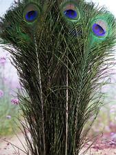 Heiß 10PCS Natur PFAUENFEDERN 40-45 cm ECHTE Pfauenaugen Schmuck-Federn Pfau