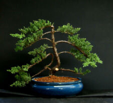 Old Specimen Bonsai Japanese Dwarf Juniper Bonsai Tree # 223