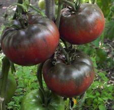 Tomato Black Krim 100 seeds
