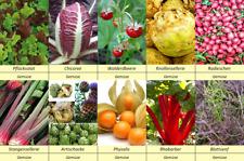 10 Gemüse Samen Set 4, Artischocke Physalis Radieschen Rhabarber Sellerie.,