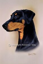 Doberman Pinscher Print by Robert J. May