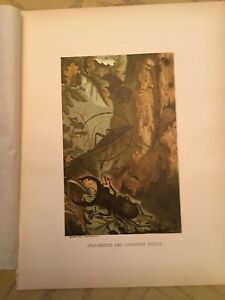 "Animate Creation 1885 ""Stag  Beetle "" Chromolithograph by Prang-Selmar Hess"