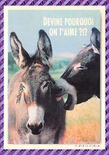 Carte Postale - Âne