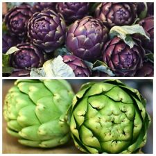Seeds Artichoke Purple Green Romagna Heirloom Organic Vegetable