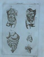 1797 Original Estampado Anatomía Interno Cuerpo Parts Intestines Pulmones Hígado
