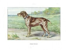 1930 Art Castellan France Dog Watercolor Print French Shorthaired Pointer