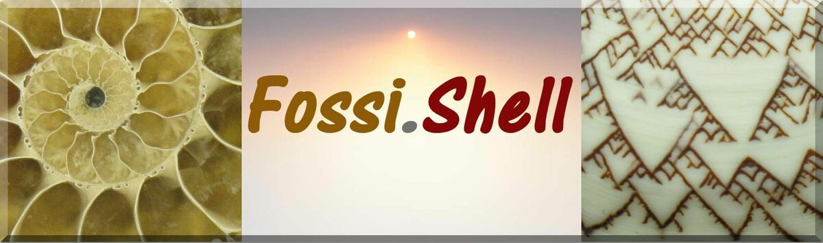 fossi.shell