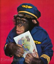 1959 Vintage MONKEY HUMOR Chimpanzee AIRLINE PILOT AVIATION Travel Animal Photo