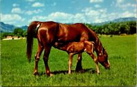 HORSE NURSING FOAL Pasture Animals Mother & Baby Equine Ranch Vintage Postcard