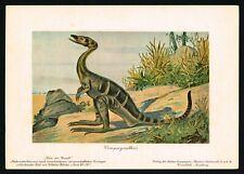 Compsognathus Dinosaur, Prehistoric Extinct Animal, Tiere der Uwelt F.John 1900