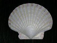 Tropical Fish Sea Life  3 1/2 inch Sea Shell Refrigerator Magnet White