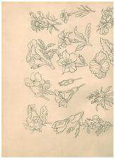 Bleistift Schumann Otto Wassermann Arzberg Blume Serie Zeichnung rarität märz 43