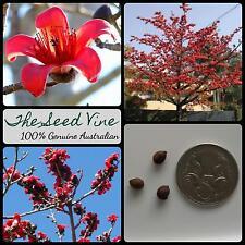 10+ RED SILK COTTON TREE SEEDS (Bombax ceiba) Tropical Flower Medicinal Garden
