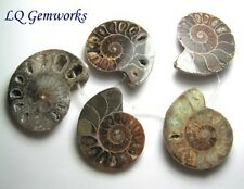 5 ea AMMONITE FOSSIL 46-52mm Pendant Beads NATURAL /a5