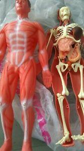 corps humain anatolab nathan 35 cm