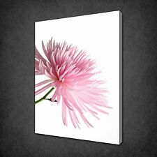 PINK CHRYSANTHEMUM FLOWER MODERN WALL ART CANVAS PRINT PICTURE READY TO HANG