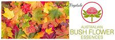 FIORI AUSTRALIANI Autumn Leaves SERENITA CAMBIAMENTI/TRANSIZIONE VITA SPIRITUALE