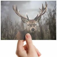 "Stag Forrest Animal Antlers Small Photograph 6"" x 4"" Art Print Photo Gift #2174"
