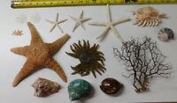 Mixed Starfish, Coral, Dried Sea life Shells Turbo Craft Decor Lot # 44-L