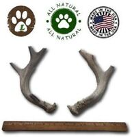 Great Lakes Premium Large Grade A Whitetail Deer Antler for Dogs, All Natural