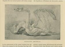 ANTIQUE PRIMITIVE NAIVE STUDY OF A SWAN BIRD WINGS OLD VICTORIAN DRAWING PRINT